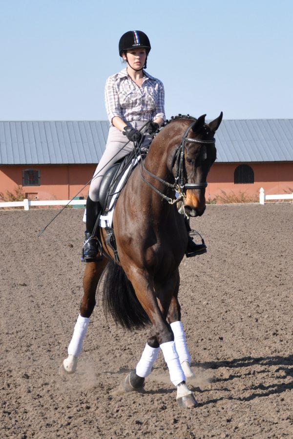Halfpass Magnolia Sport Horse Jill Costello Chavers